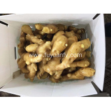 2018 crop fresh ginger